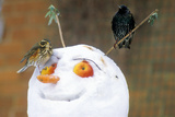 Birds Perched on a Snowman