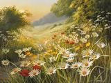 Soleil du soir Giclée premium par Mary Dipnall