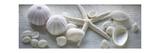 Driftwood Shells I