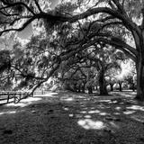 Under the Canopy I