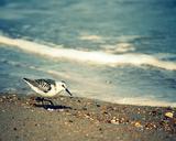 Pebbles at the Beach I