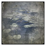 Zen Pond 2