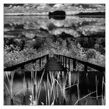 Pond-Land 4