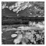 Pond-Land 2