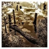 Infrared Pond 10
