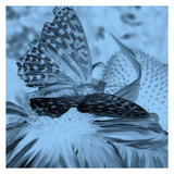 X-Ray Butterfly 1