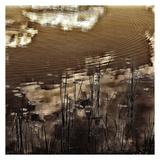 Infrared Pond 11