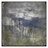 Zen Pond 3