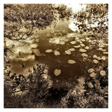 Infrared Pond 7