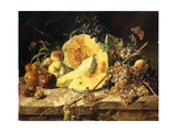 A Still Life with Fruit  Nuts and Insects