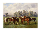 A Group of Polo Ponies  Dainty  Gold  Redskin  Miss Edge  and Piper