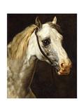 Head of a Piebald Horse