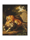 A Tiger attacking a Bull