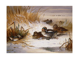 Mallard Widgeon and Snipe at the Edge of a Pool in Winter