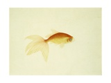 Study of a Goldfish