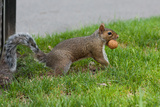 Gray Squirrel Gets His Nut Plastic Sign