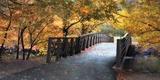 Autumn Overpass - Special