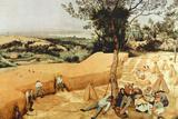 Pieter Bruegel The Grain Harvest Plastic Sign