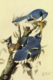 Audubon Blue Jay Bird Plastic Sign