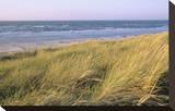 Beach  Langeoog  East Frisian Islands  Lower Saxony  Germany