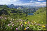 Alpine Meadow on Lake Seealpsee with Hoefats Mountain and Allgaeu Alps