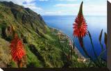 Coastal landscape and village of Paul do Mar  Madeira Island  Portugal