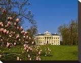 Blooming Magnolia and Woerlitz Castle at Woerlitz Gardens  Saxony-Anhalt  Germany