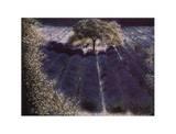 Das Lavendelfeld 3060
