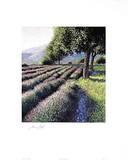 Junger Lavendel 3154
