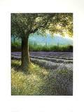 Baum und Lavendel 3063