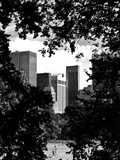 Natural Heart Formed by Trees Overlooking Buildings  Central Park in Summer  Manhattan  New York