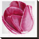 Vivacious Tulip Bloom