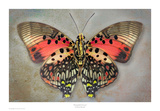 Shining Red Charaxes