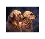 Blond Goldens