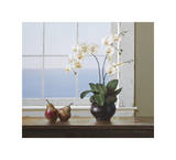 Orchids with Pears