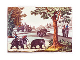 The Various Stages of the Capture of An Elephant in India