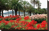 Palm-lined Promenade at the Gulf  City of La Spezia  Italian Riviera  Liguria  Italy