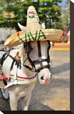 Horse with Straw Hat in Valladolid  Yucatan Peninsula  Mexico