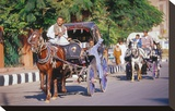 Horse and carriage on Riverside Drive in Luxor  Thebes West  Kena  Egypt