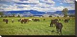 Horse farm in Grand Teton National Park  Wyoming  USA