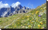 Meadow at Sexten Dolomites Nature Park  Province of Bolzano  South Tyrol  Italy