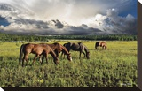 Pammie's Pasture