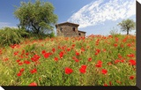 Poppy Field in front of a Country House on the Hills near Orvieto  Province of Terni  Umbria  Italy