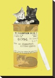 Kitten Prescription
