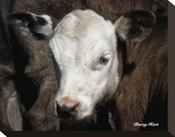 Calf 4