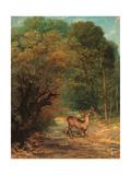 Hunted Roe Deer on the Alert  Spring