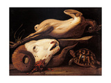 Still Life with Ram Head  Turtle and Plucked Chicken  by Cerano  17th c Milan  Italy