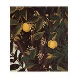Primavera  Oranges and  blossoms