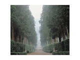 Walk in the Boboli gardens know as the Viottolone  16th c  Florence  Italy
