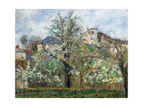 Vegetable Garden and Trees in Blossom  Spring  Pontoise